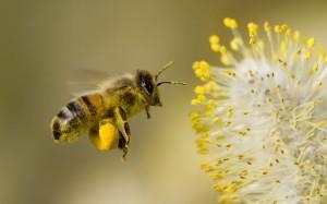 chula vista bees